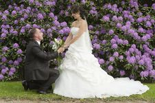 Free Wedding Stock Image - 20349051