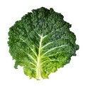 Free Savoy Cabbage Royalty Free Stock Photo - 20352185