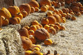 Free Pumpkins On Bales Royalty Free Stock Photo - 20356595