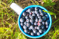 Free Cup With Fresh Berries Stock Image - 20359821