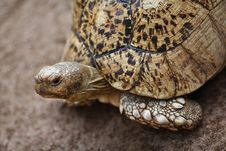 Tortoise Close-up Royalty Free Stock Photos