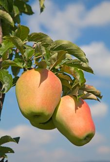 Free Apple Garden Stock Photos - 20351903