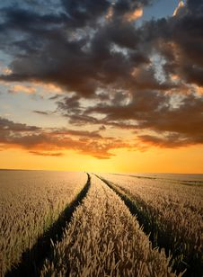 Free Sunset Over Fields Stock Images - 20352284