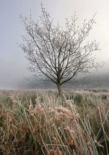 Free Frosty Tree Stock Image - 20352891