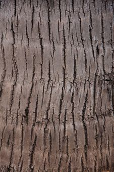 Free Palm Tree Bark Royalty Free Stock Image - 20352986