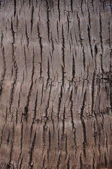Free Palm Tree Bark Royalty Free Stock Image - 20352986