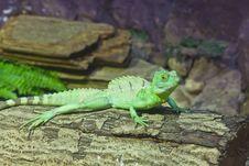 Free Little Lizard On A Stick Stock Photography - 20353422