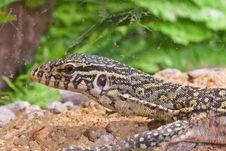 Free Little Lizard,savanna In Glass Stock Image - 20353611