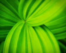 Free Green Leaves With Curvy Lines Royalty Free Stock Photo - 20353715