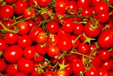 Free Red Tomato Stock Photography - 20353772