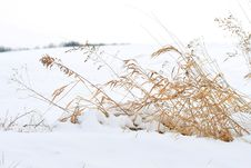Free Winter Wheat Royalty Free Stock Photography - 20354007