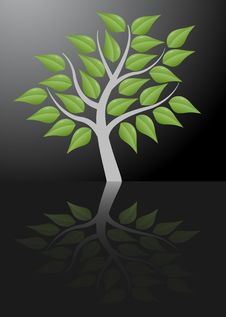 Free Tree With Reflection Stock Photography - 20354062