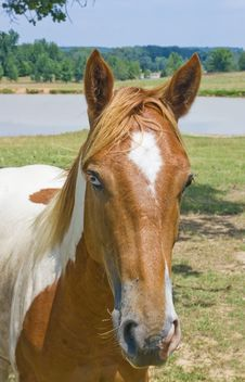 Free Portrait Of A Horse With Colored Eyes Stock Images - 20355094