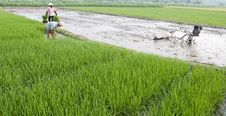 Free Asian Peasantry Grow Rice Stock Photo - 20355420
