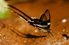 Free Green Dragontail Butterfly Royalty Free Stock Photography - 20355677