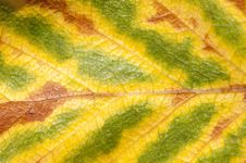 Free Abstract Leaf Background Stock Photography - 20359952