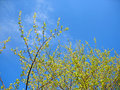 Free Trees And Blue Sky Stock Image - 20361221