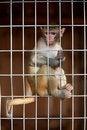 Free Llittle Chimpanzee Stock Image - 20362951