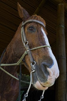 Free Horse Portrait Royalty Free Stock Image - 20360116