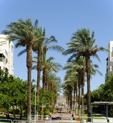 Palm Alley In A New District Of Eilat City, Israel Royalty Free Stock Image