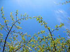 Free Trees And Blue Sky Stock Photos - 20361203