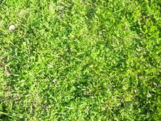 Free Green Grass Royalty Free Stock Photo - 20361275