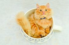 Free Kitten In Cup Royalty Free Stock Photography - 20361357