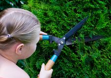 Free Hands Are Cut Green Bush Clippers Stock Photo - 20361980