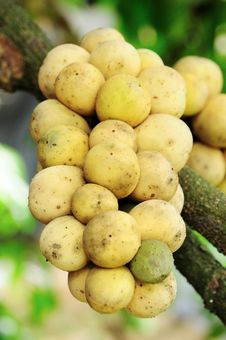 Long-Gong (Thai Fruits) Stock Photo