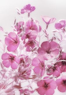 Free Pink Flowers Stock Photography - 20364342