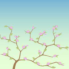 Free Spring Tree. Stock Image - 20364861