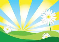 Free Daisy Background Royalty Free Stock Photography - 20366767