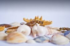 Free Seahorse With Seashells And Stars Royalty Free Stock Image - 20367436