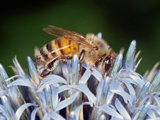 Free Bee Stock Images - 20367654