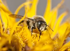 Free Bee Stock Photography - 20367692