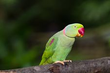 Free Green Parrot Bird Royalty Free Stock Images - 20367869