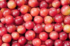 Free Layer Of Plums Stock Images - 20369854