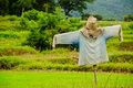 Free Thai Scarecrow Royalty Free Stock Photo - 20371925