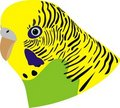 Free Wavy Parrot Stock Photography - 20373892