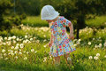 Free The Little Girl With Dandelions Royalty Free Stock Photo - 20378145