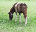 Free Horse In Farm Stock Photo - 20379740