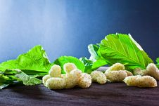 Free Mulberry On Old Wood Stock Images - 20370764