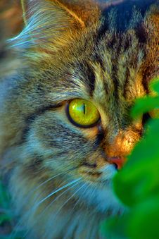 Free Close-up Of A Cat In The Grass Stock Photo - 20374310