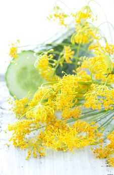 Free Fresh Dill Stock Image - 20375701
