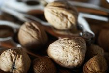 Free Walnuts Royalty Free Stock Images - 20376969
