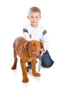Free A Cute Boy With The Dog Royalty Free Stock Photo - 20377135