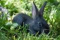 Free Little Mammal Rabbit Royalty Free Stock Photo - 20384285