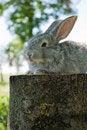 Free Little Mammal Rabbit Royalty Free Stock Image - 20384346