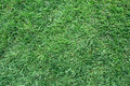 Free Green Grass Field Background Royalty Free Stock Image - 20384406