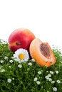 Free Fresh Apricot On A Green Grass Stock Photo - 20385380